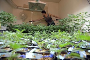 Real estate market for pot growers